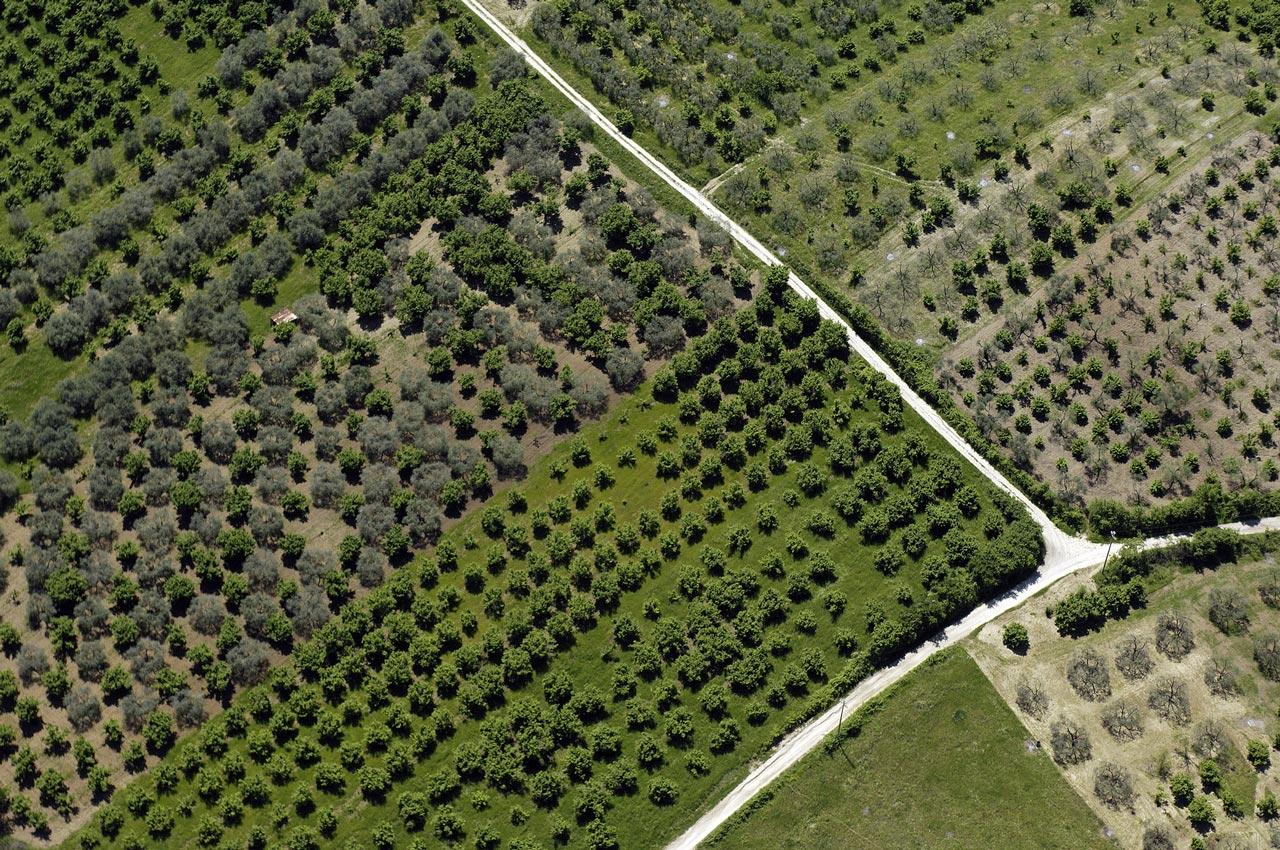 le-balze-olive-tree-adapt-extra-vierge-olio